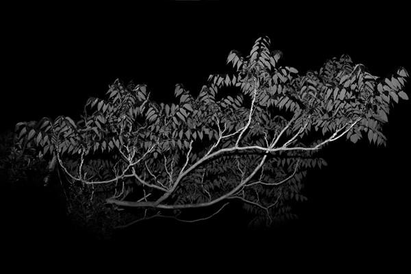 Efi Haliori, Untitled, 2018, Pigment Inks on Photographic Paper Mounted on Plexiglass, 113x170cm, Ed.of 3