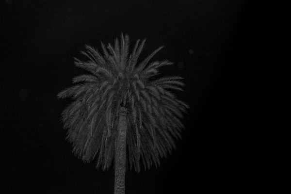 Efi Haliori, National Garden, 2018, Pigment Inks on Photographic Paper Mounted on Plexiglass, 40x60cm, Ed.of 3