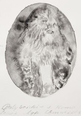 Marianna Ignataki, Hairman VII, 2016, watercolor and pencil on paper, 28x19cm