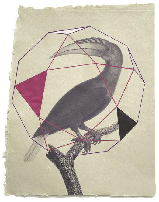 Versaweiss / Tucano / Print and colored pencils on handmade paper, 44x33cm, ed. of 10
