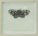 Leonidas Giannakopoulos, Moth, 2013, ink on paper, 23x25cm