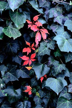 Alexis Vasilikos, Untitled (Red Leaves), 2013, Inkjet print on fine art paper mounted on forex, 40x60cm