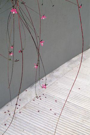 Alexis Vasilikos, Untitled (Pink Flowers), 2011, Inkjet print on fine art paper mounted on forex, 30x45cm