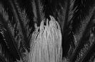 Alexis Vasilikos, Untitled (Palm), 2012, Inkjet print on fine art paper mounted on forex, 30x20cm