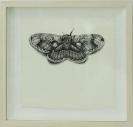 Leonidas Giannakopoulos, Moth, 2013, ink on paper, 23x25cm