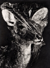 Maria Kriara, Untitled, 2013, graphite on paper, 120x60cm, detail
